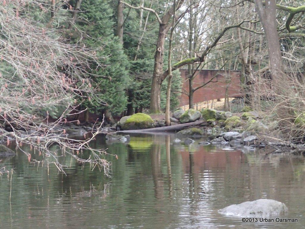 Deer Lake Afternoon016