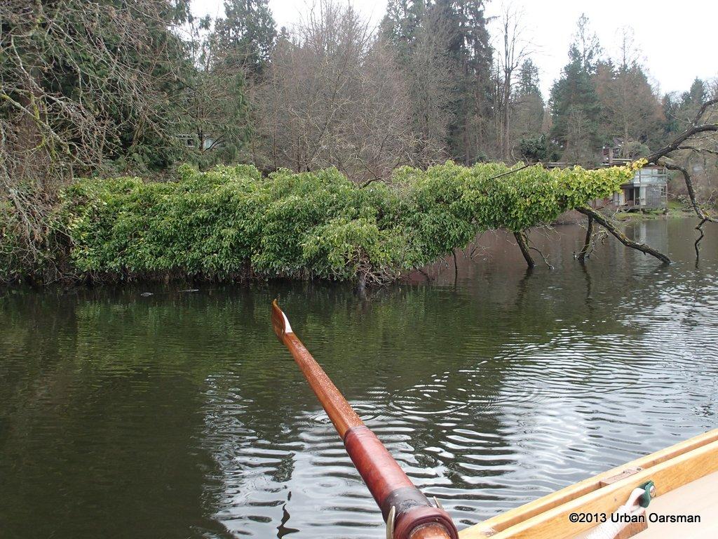 Deer Lake Afternoon040