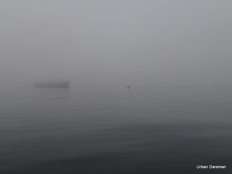 The Urban Oarsman...The fog row