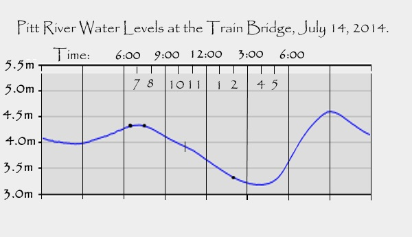Pitt River Water Level graph