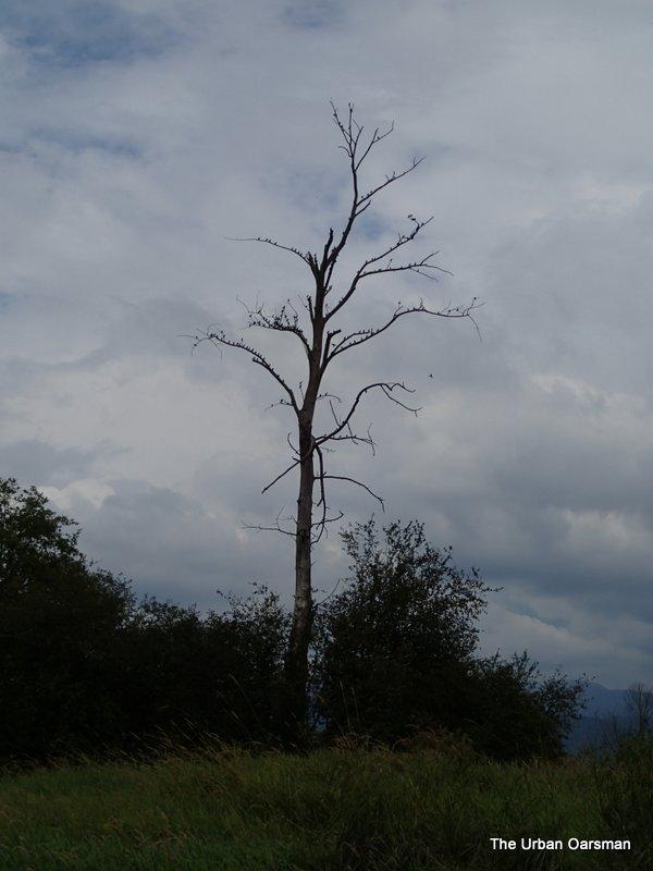 Birds on Dead Tree Island.