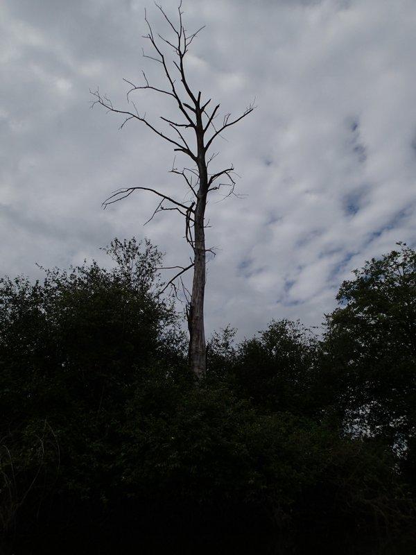 Dead Tree on un-named Island.