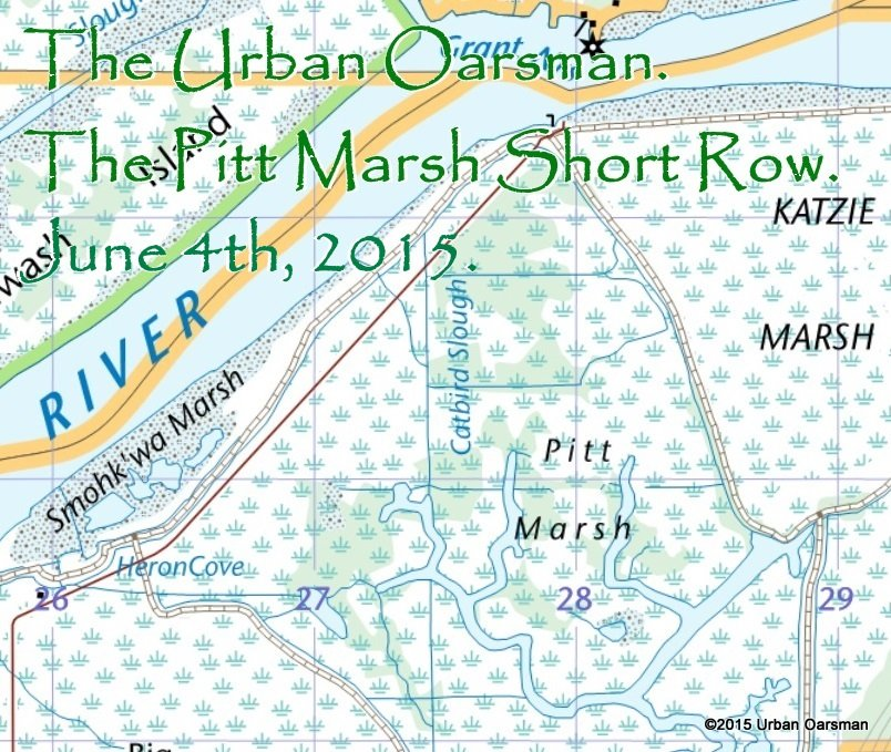 The Urban Oarsman, The Pitt Marsh Row